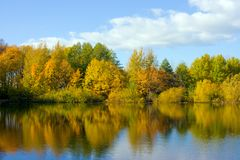 Reflection in lake. Autumn wood. Reflection in lake royalty free stock image