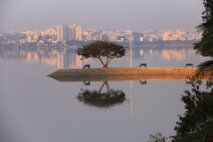 Reflection on a lake at early morning. At Hyderabad, Andhra Pradesh, India. This pic is from Hussain Sagar lake Royalty Free Stock Image