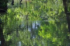 Reflection in lake. Green reflection in lake stock photography
