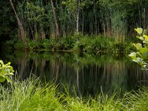 Reflection in lake. Green grass and trees in the lake reflection Royalty Free Stock Photography