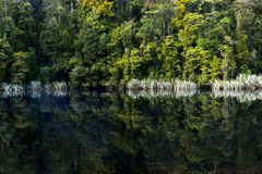 The reflection of Lake Matheson Royalty Free Stock Photos