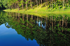 Reflection of lake in  Pang Ung Forestry Plantations, Maehongson Royalty Free Stock Image