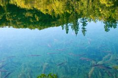Reflection in lake Royalty Free Stock Photography