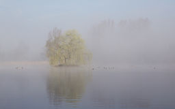 Reflection In Lake Of Tree In Fog Stock Photography