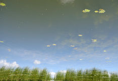 Reflection in the lake waters Royalty Free Stock Images