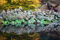 Reflection of large wilted leaves in a lake Stock Photo