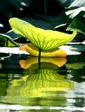 Reflection of a leaf in the water Royalty Free Stock Images