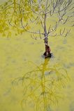 The Reflection of life. The tree Stand alone with its reflection in the nice color water Royalty Free Stock Photos