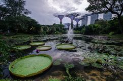 Reflection of the Marina Bay Sands Hotel. Stock Images