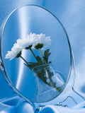 Reflection in a mirror bouquet from  flowers Stock Photo