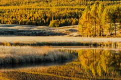 Reflection in the mirror of the lake trees yellow poplar grove. Autumn Sunny weather Royalty Free Stock Image