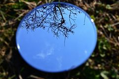 Reflection on a mirror. Reflection of a tree in a mirror with blue sky royalty free stock images