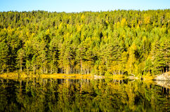 Reflection of morning autumn landscape in fjord Stock Photos