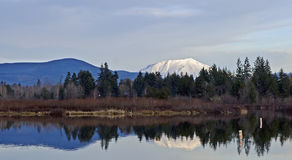 Reflection of Mount Saint Helens. Mount Saint Helens reflected in a lake Royalty Free Stock Photos
