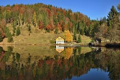 Reflection, Nature, Wilderness, Leaf royalty free stock photos