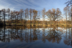 Reflection of oak tree alley Royalty Free Stock Photos
