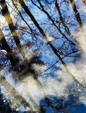 Reflection Of Trees Royalty Free Stock Photography