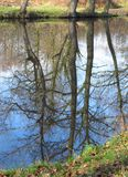 Reflection of old trees in the water Stock Photo