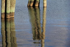 Reflection of old wood pilings in calm water Stock Images