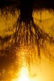Reflection orange sunset Stock Photos