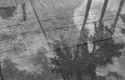Reflection of palm tree on street Stock Photo