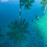 Reflection palm trees in the blue pool royalty free stock photo