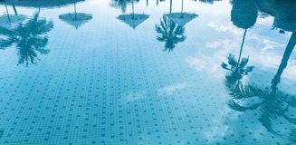 Reflection of palm trees on the water of a swimming pool stock image