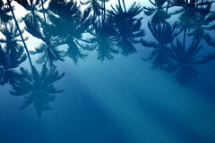 Reflection of palms in the water royalty free stock image