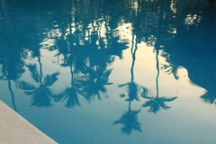 Reflection of palms in water Royalty Free Stock Image