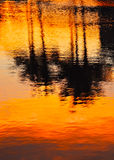 Reflection of palms in water at sunset Royalty Free Stock Images