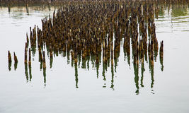 Reflection of Pilings in Calm Water Stock Images