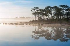 Reflection of Pine Tree and Blue sky near Wangkwang Reservoir Royalty Free Stock Photos