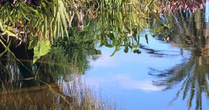 Reflection Of Plants And Palm Tree In Water Pond