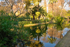 Reflection pond Royalty Free Stock Images