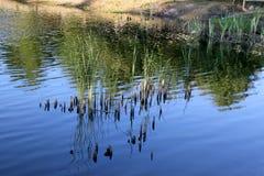 The autumn reflection. Stock Photos