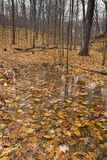 Reflection on pond in autumn. Royalty Free Stock Images
