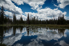 The Reflection in the Pond Stock Photography