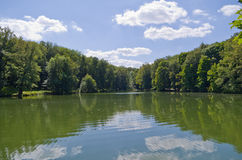 Reflection in a pond surrounded by trees. Landscape reflected in a pond surrounded by trees, the blue sky clouds float Stock Photo