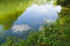 Reflection in a pond surrounded by trees. Reflection of trees in the water, sky and clouds Royalty Free Stock Photo