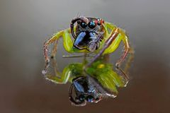 Reflection colorful spider royalty free stock image
