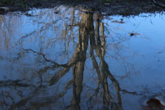 Reflection in a puddle Stock Images