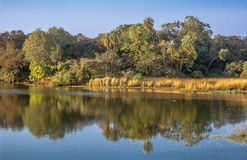 Reflection in ranthambore Stock Photography