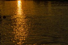 Reflection of the rays of the setting sun on the surface of the water. Water texture. Natural background royalty free stock photography