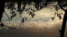 A reflection of the rays of the sun on the water at sunset under the foliage of trees stock video footage