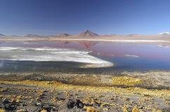 Reflection in red flamingo lake. During the salar the Uyuni tour, laguna Colorado is one of the most beautiful lakes. Flamingos foraging in these waters makes it stock photography