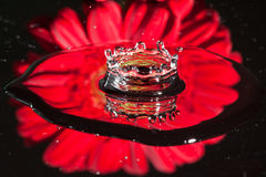 Reflection of a red flower Royalty Free Stock Image