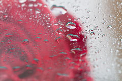 Reflection of red rose on glass Royalty Free Stock Photography