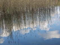 Reflection of reed, blue sky and clouds in water Stock Photo