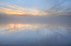 Reflection. Reeds reflecting in the water a beautiful quiet morning Royalty Free Stock Photos
