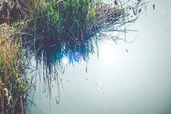 Reflection of reeds and sun Royalty Free Stock Photo